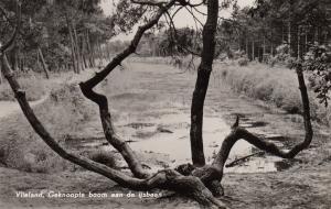 Knoopboom-1