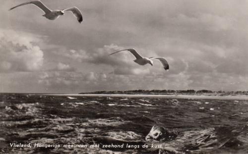 Noordzee-8