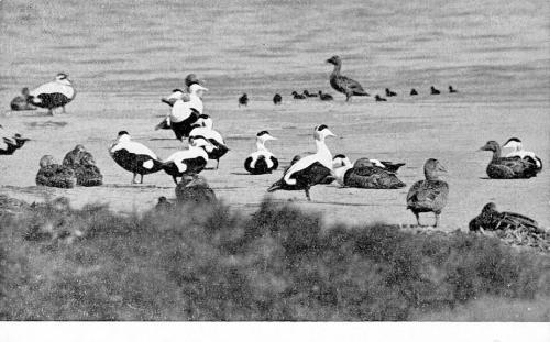 Vogels-12