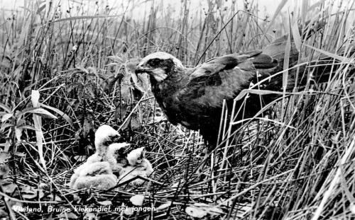 Vogels-13