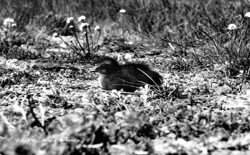 Vogels-15