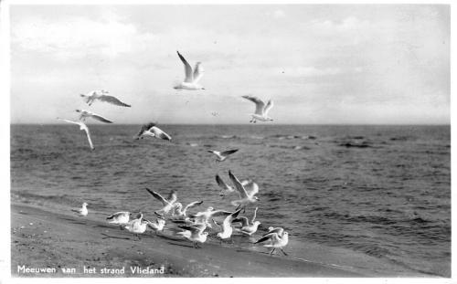 Vogels-17