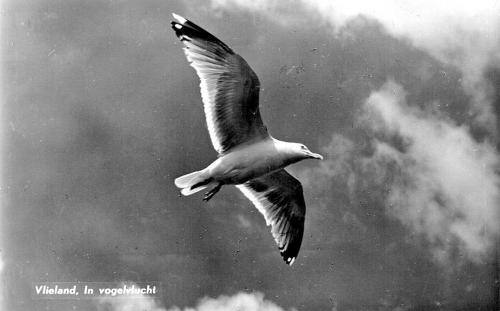 Vogels-21