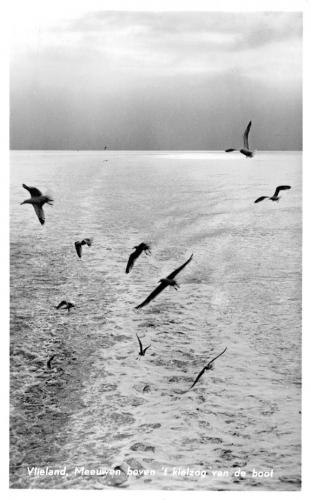 Vogels-23