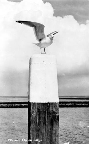 Vogels-4