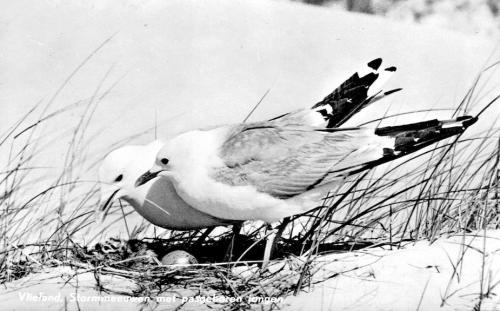 Vogels-6