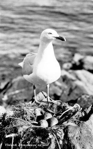 Vogels-8