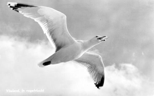 Vogels-9
