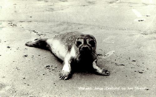 Zeehonden-3